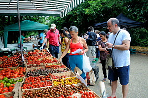 People buying tomatoes from stall Alexandra Palace Farmers Market, Haringey, London, UK, August 2014.  -  Pat  Tuson