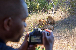 Student taking picture of Lion (Panthera leo) during Wild Shots Outreach Course.  Timbavati Game Reserve, Limpopo Province, South Africa  -  Wild Shots Outreach