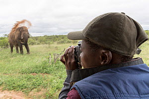 Student taking pictures of African elephant (Loxodonta africana) dustbathing during Wild Shots Outreach Course. Timbavati Game Reserve, Limpopo Province, South Africa  -  Wild Shots Outreach
