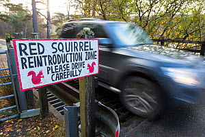 Sign erected alerting drivers to red squirrels crossing road, Shieldaig, Wester Ross, Scotland, UK. - SCOTLAND: The Big Picture