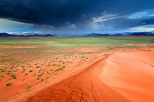 Namibia Desert landscape with rainstorm, viewed from sand dunes,. Namib Rand, Namibia, February 2011. - Hougaard Malan
