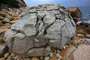 Granite boulder on the coast, Yakushima Island, UNESCO World Heritage Site, Japan.  -  Cyril Ruoso