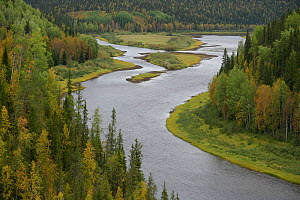 River flowing  through Virgin Komi Forests UNESCO World Heritage site, the largest virgin forests in Europe. Ural Mountains, Komi Republic, Russia. August 2016 - Igor  Shpilenok