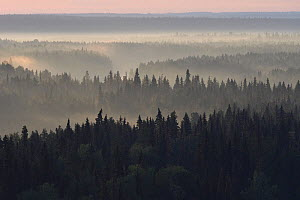 Landscape of the Virgin Komi Forests UNESCO World Heritage site, the largest virgin forests in Europe. Ural Mountains, Komi Republic, Russia. August 2016 - Igor  Shpilenok