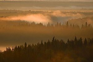 Landscape of the Virgin Komi Forests UNESCO World Heritage site at sunrise. These are the largest virgin forests in Europe. Ural Mountains, Komi Republic, Russia. August 2016 - Igor  Shpilenok