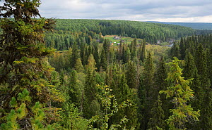 Virgin Komi Forests UNESCO World Heritage site, the largest virgin forests in Europe. Ural Mountains, Komi Republic, Russia. August 2016 - Igor  Shpilenok
