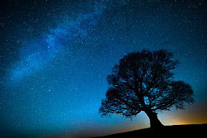 Oak tree (Quercus robur) silhouetted against  night sky with stars, Brecon Beacons National Park, Wales, UK. December  -  Phil Savoie