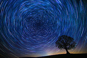 English oak tree (Quercus robur) at night with circle of star trails, Brecon Beacons Wales, UK. December 2016.  -  Phil Savoie