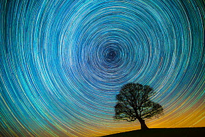 English oak tree (Quercus robur) at night silhouetted against circle of star trails, Brecon Beacons Wales, UK. January 2017.  -  Phil Savoie