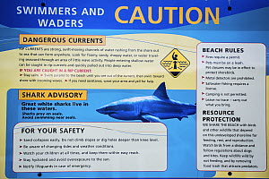 Great White Shark (Carcharodon carcharias) warning sign, Cape Cod, Massachusetts, USA, August.  -  Phil Savoie