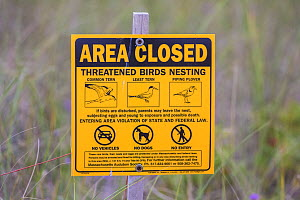 Area closed sign, due to nesting birds including Common tern, Least tern, Piping plover, Dennisport, Massachusetts, USA, August. - Phil Savoie