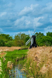 Wicken Fen wetlands with windmill water pump and Phragmites reeds, Cambridgeshire, England, May.  -  Gary  K. Smith