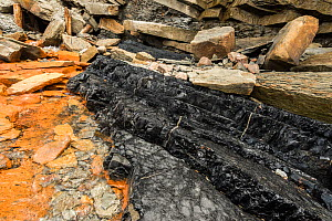Coal seam running out from the entrance of a former mine shaft at the Joggins Fossil Cliffs UNESCO World Heritage Site along the shore of the Bay of Fundy in Nova Scotia, Canada. May 2017 - Nick Hawkins