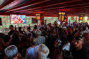 Visitors to Beauval Zoo watching video of the first moments of life of the Gant panda (Ailuropoda melanoleuca) baby. The baby was born the evening of the 4th August, Beauval Zoo, France. 5th August 20... - Eric Baccega