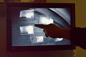 Householder points to a monitor linked to an infra red camera in her attic focused on a group of perspex backed swift nestboxes, Cambridge, UK, July. Model released.  -  Nick Upton