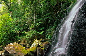 Subtropical rainforest with waterfalls at Brindle Creek, Border Ranges National Park, Gondwana Rainforest UNESCO Natural World Heritage Site, New South Wales, Australia.  -  Jiri Lochman