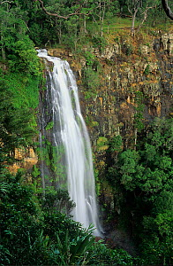 Moran falls and subtropical rainforest, Lamington National Park, Gondwana Rainforest UNESCO Natural World Heritage Site, Australia.  -  Jiri Lochman