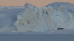 Adelie penguins (Pygoscelis adeliae) walking in front of a blue iceberg, Adelie Land, Antarctica, January.  -  Fred  Olivier