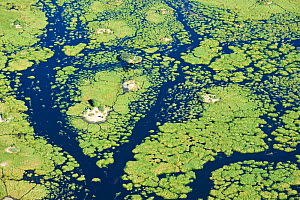Aerial view of the Okavango delta with channels, lagoons, swamps and buffaloes (Syncerus caffer) on an island, Botswana, Africa  -  Eric Baccega
