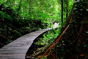 Wooden walkway through the interior of the Gunung Mulu National Park UNESCO Natural World Heritage Site, Malaysian Borneo. - Enrique Lopez-Tapia