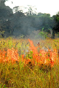 Controlled grassland fire, Lopé National Park, Ecosystem and Relict Cultural Landscape of Lopé-Okanda UNESCO World Heritage Site, Gabon. - Enrique Lopez-Tapia