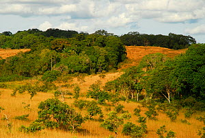 Landscape of Lopé National Park, Ecosystem and Relict Cultural Landscape of Lopé-Okanda UNESCO World Heritage Site, Gabon. - Enrique Lopez-Tapia