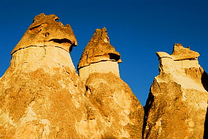 Pinnacles, also known as fairy chimneys or hoodoo,  Love Valley. Goreme National Park and the Rock Sites of Cappadocia UNESCO World Heritage Site. Turkey. December 2006.  -  Enrique Lopez-Tapia