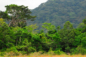 Forest landscape in Lopé National Park, Ecosystem and Relict Cultural Landscape of Lopé-Okanda UNESCO World Heritage Site, Gabon. - Enrique Lopez-Tapia