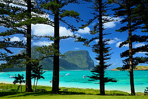 Norfolk Island pine trees (Araucaria heterophylla) near lagoon with Mount Lidgbird and Mount Gower in the background, Lord Howe island, Lord Howe Island Group UNESCO Natural World Heritage Site, New S... - Oriol  Alamany