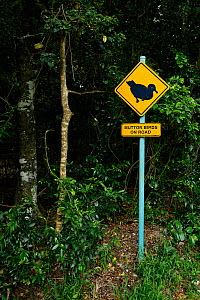 Mutton bird/r Flesh-footed Shearwater (Puffinus carneipes) warning sign on the road,  Lord Howe Island Group UNESCO Natural World Heritage Site, New South Wales, Australia. October. - Oriol  Alamany