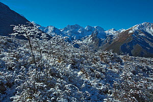 Landscape of mountains and snow covered trees, Balang Mountain, Wolong National Nature Reserve, Sichuan Giant Panda Sanctuaries - Wolong,  Mt Siguniang and Jiajin Mountains UNESCO World Heritage Site,... - Dong Lei