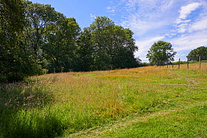 Meadow after one year of fencing from deer, Rookery Wood  Sussex, England, UK, July 2014. - Stephen  Dalton
