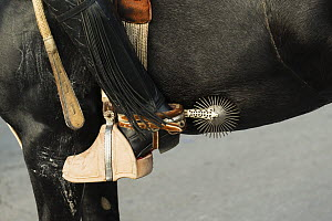 Close-up of a traditionally dressed horse rider's stirrup, boot and spurs, Cuasimodo Catholic festival, Colina, Chacabuco Province, Santiago Metropolitan Region, Chile, Latin America. April 2017.  -  Kristel  Richard