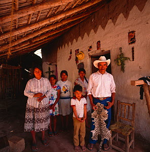 Family living near the Rio Cuchujaqui with hunted Ocelot (Felis pardalis) skin / pelt. Sierra Madre foothills, Mexico 1992  -  Jack Dykinga