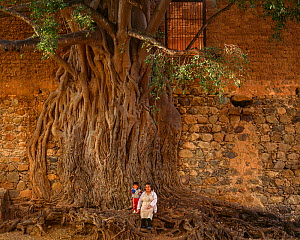Grandmother and grandson  standing next to Strangler fig (Ficus padifolia) covering the wall of their home, Aduana, near Alamos, Sonora, Mexico.  -  Jack Dykinga
