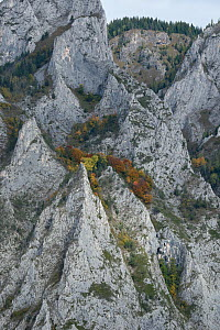 Limestone rocks of Mount Belioara. Alba county, Transylvania, Romania. October 2011. - Orsolya Haarberg