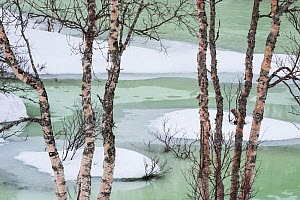 Pale green river in the Lofoten Islands. The weather turned mild and melting water quickly filled the riverbeds that were still covered by ice�hence the light color of the water. Lofoten Islands, Norw... - Orsolya Haarberg