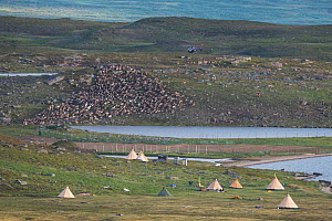 Sami camp where they collect their reindeer for calf marking, Lake Slappejaure. They use helicopter and motorcycles for moving the herd. Padjelanta National Park, Laponia World Heritage Site, Swedish... - Orsolya Haarberg
