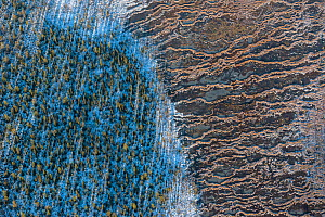 Aerial abstract photograph of snow-covered string bogs/ aapa mires in the Muddus National Park. Laponia World Heritage Site, Swedish Lapland, Sweden. December 2016.  -  Orsolya Haarberg