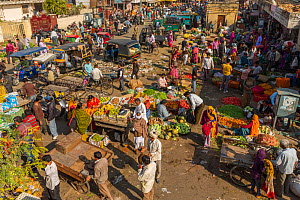 Fruit and vegetable market in the Old City, Jaipur, Rajasthan, India, Indian Sub-Continent, Asia.  -  Mark MacEwen