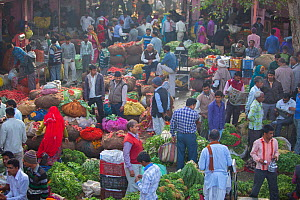 Fruit and vegetable market in the Old City, Jaipur, Rajasthan, India. March 2015  -  Mark MacEwen