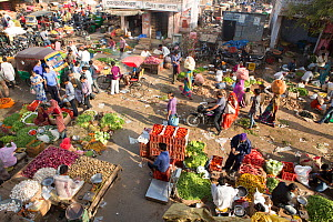 Fruit and vegetable market in the Old City, Jaipur, Rajasthan, India, Indian Sub-Continent, Asia. March 2015  -  Mark MacEwen