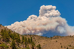 Fort Collins- Colorado forest  fire seen from Estes Park. The fire was intensified by dead trees killed by the Mountain pine beetle (Dendroctonus ponderosae) Colorado, USA, June. The current outbreak... - Jeff Foott
