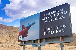 Warning sign to cut down  trees killed by Mountain pine beetle (Dendroctonus ponderosae)  because of the fire hazard. Sign is near Dubois, Wyoming, USA. The crrent outbreak of mountain pine beetles ha... - Jeff Foott