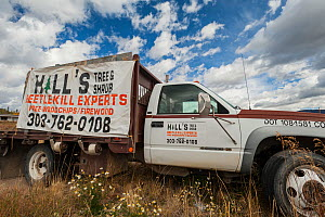 Beetle killed tree clean up truck, near Rocky Mountain National Park, Colorado, USA, September. The current outbreak of mountain pine beetles has been particularly aggressive. This is due to climate c...  -  Jeff Foott