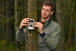 Dave Bavin setting up a trailcam in a dense coniferous plantation to photograph a radio-collared Pine Marten (Martes martes) reintroduced to Wales by the Vincent Wildlife Trust after locating it by ra...  -  Nick Upton