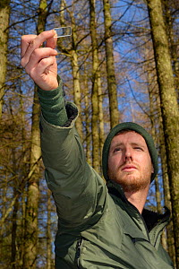 David Bavin using a wedge prism relascope to record the tree density of coniferous plantation habitat where Pine Martens (Martes martes) have been reintroduced by the Vincent Wildlife Trust, Cambrian...  -  Nick Upton