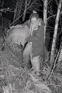 Dr. Jenny Macpherson carryng a live trap containing a Pine Marten (Martes martes) caught at night in Scottish woodland for a reintroduction project to Wales run by the Vincent Wildlife Trust, Highland... - Nick Upton