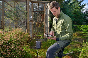 David Bavin setting a trailcam to record the emergence of a Pine Marten (Martes martes) from a temporary soft release cage during a reintroduction project by the Vincent Wildlife Trust, Cambrian Mount...  -  Nick Upton