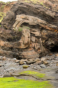 Monocline fold that has been faulted during the Variscan orogeny, in Carboniferous sandstone and shale. Broad Haven, Pembrokeshire, Wales, UK, May - Graham Eaton